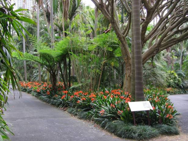 palm-grove-in-sydneys-botanic-gardens