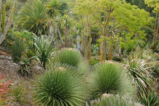 paloma_gardens-arid-garden