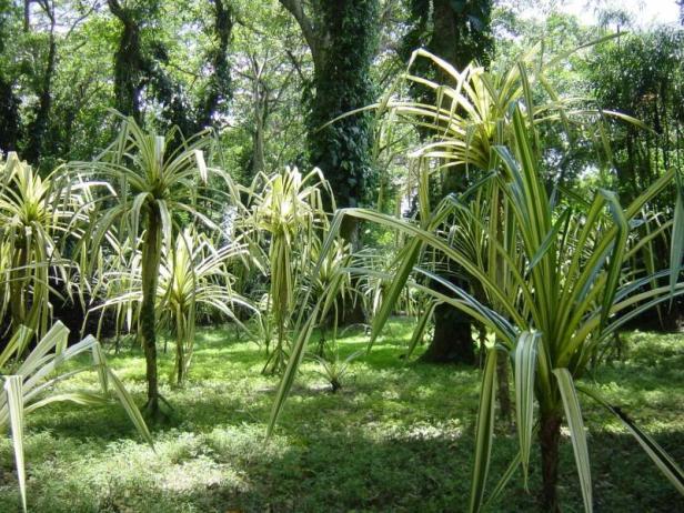 parque-de-la-exotica-flora-tropical-xa