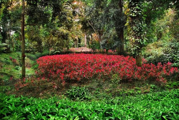 parque-de-la-exotica-flora-tropical-yaracuy-este-www-2