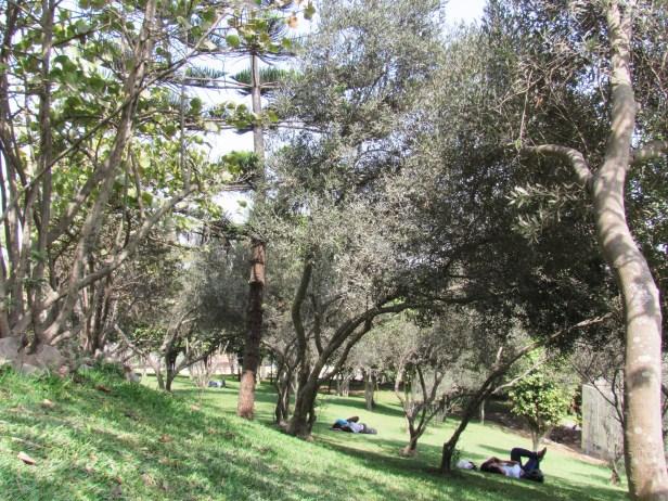 parque-ecologico-loma-amarilla