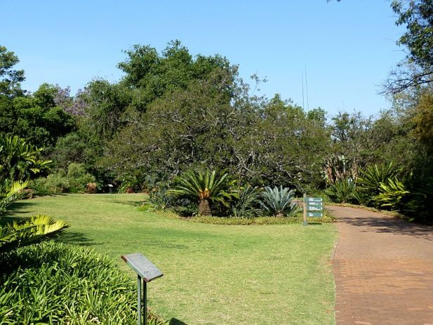 pretoria-national-botanical-garden-broodboomtuin_a_pretoria_nasionale_botaniese_tuin