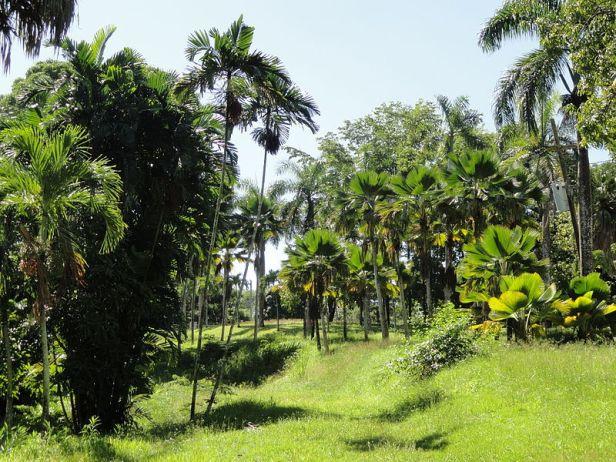 _puerto-rico-_san_juan_botanical_garden-2