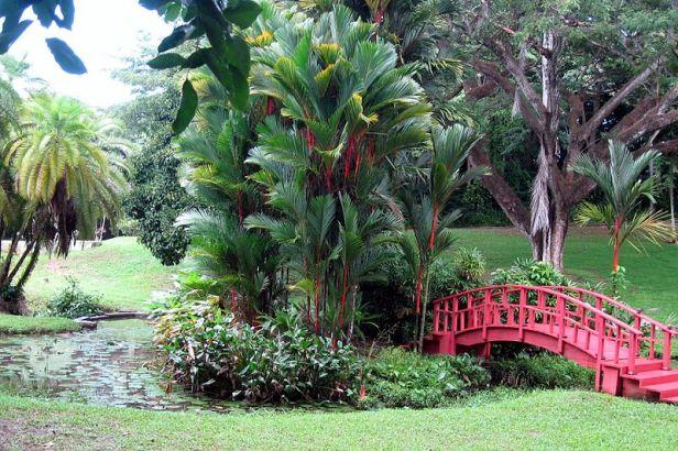 puerto_rico_university-botanical_gardens_01-2