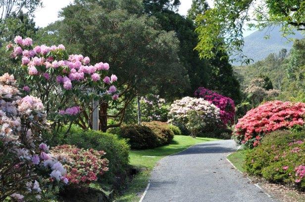 pukeiti-rhododendron-garden-bj