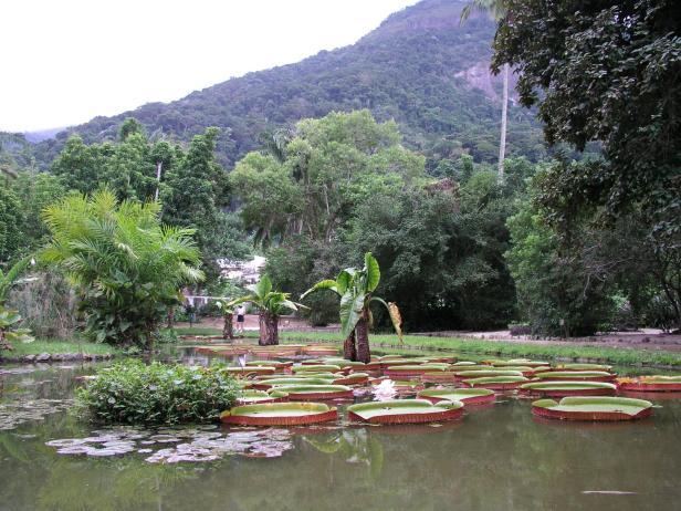 rio-jardin-botanico-9