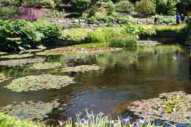 royal-tasmanian-botanical-gardens-xtr