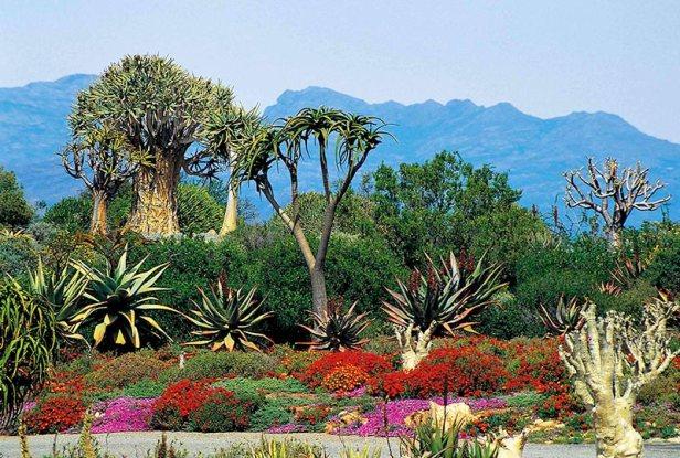 sa-worcester-karoo-gardens_april-credit-south-african-tourism-flickr-2-web