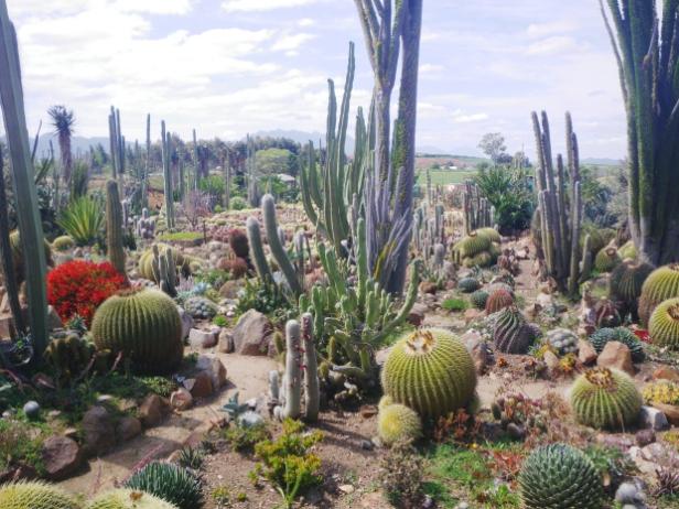 sheilam-cactus-garden-sudafrica