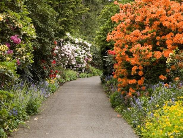 van-dusen-gardens-azaleas-2_redimensionar