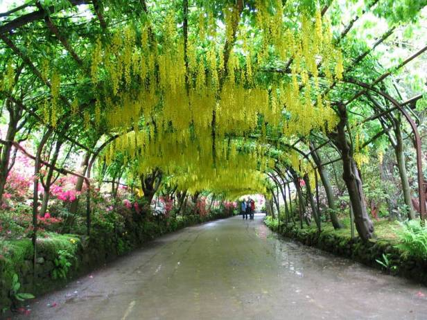 vic-jardines-de-bodnant-pergola-de-laburnum