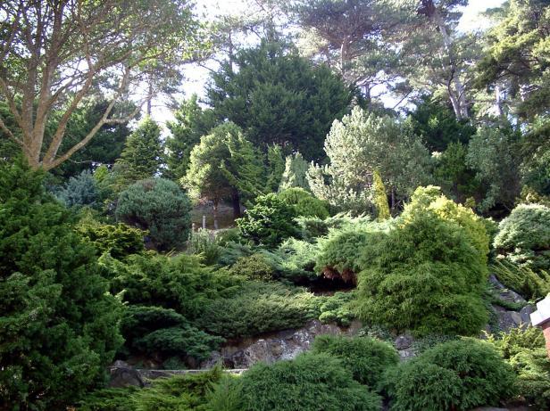 wellington-botanic-01