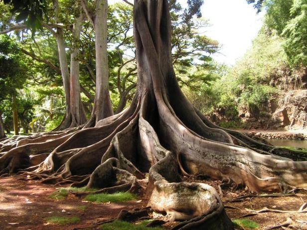 allerton-gardens-hawai-4-2