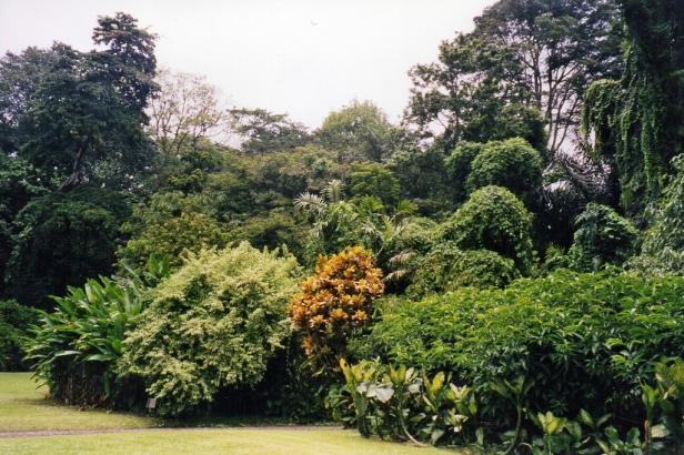 bogor-botanical-garden-and-palace-bogor-west-java-indonesia-cs