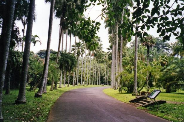 bogor-botanical-garden-and-palace-bogor-west-java-indonesia-goa