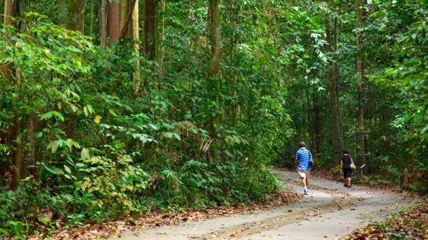bukit-timah-nature-reserve