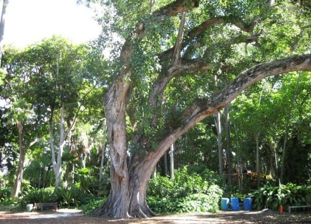 foster_botanical_garden-qa