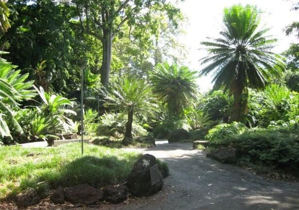 foster_botanical_garden-ty