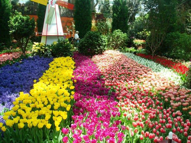 garden-of-the-bay-tulipmania-po