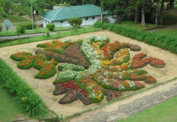 hakgala-botanical-garden-anuwara-eliya-hakgala-botanical-garden-5