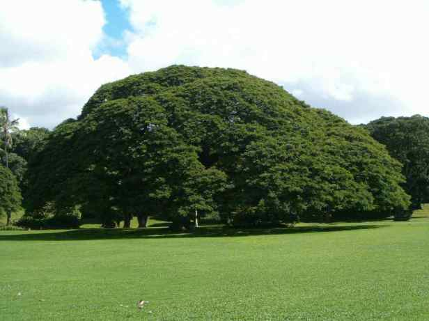 hawai-moanalua-gardens