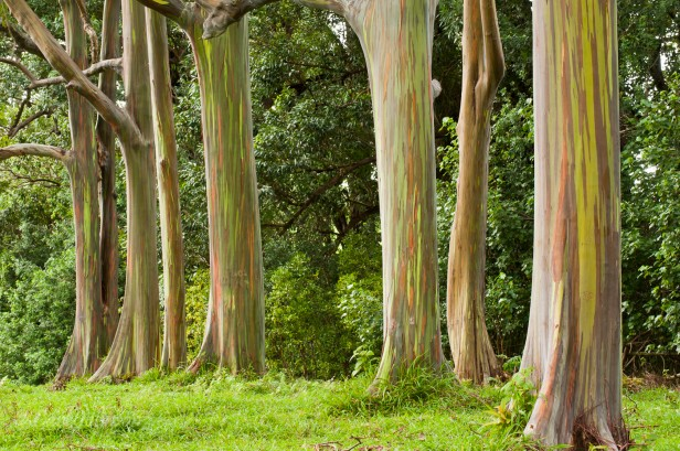 hawaii-keanae-arboretum-we-2