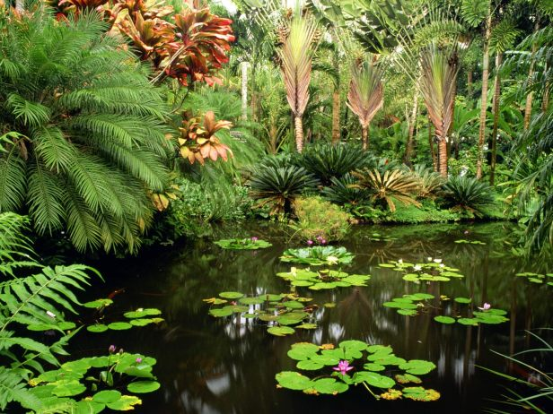 hawaii_tropical_botanical_garden