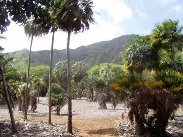 koko-crater-botanical-gardens-hawai-3