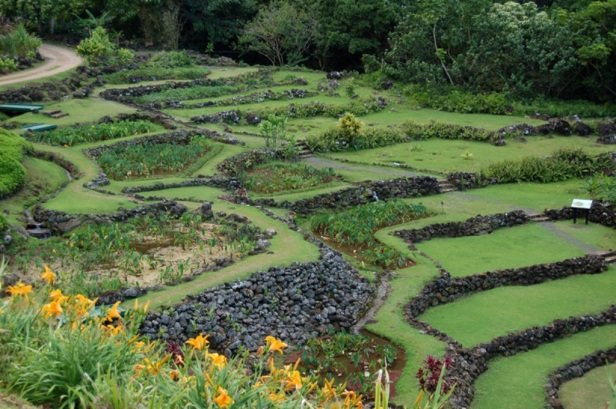 limahuli-national-tropical-_garden-hawaii-2