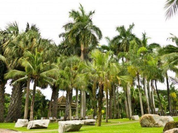 lumpini-public-park-in-bangkok