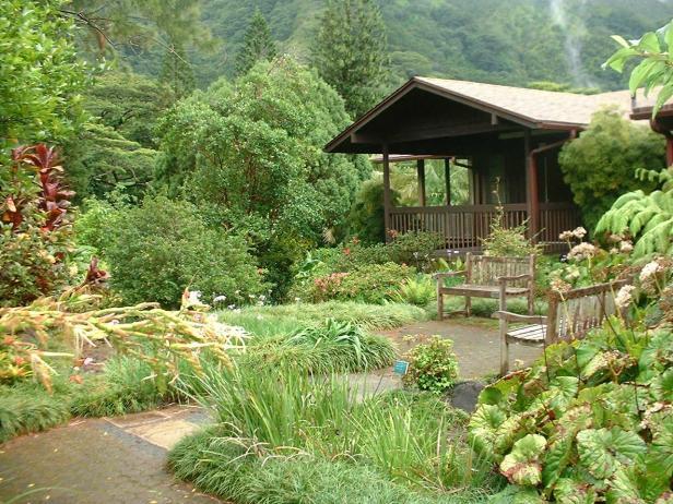 lyon-arboretum-garden-hawai