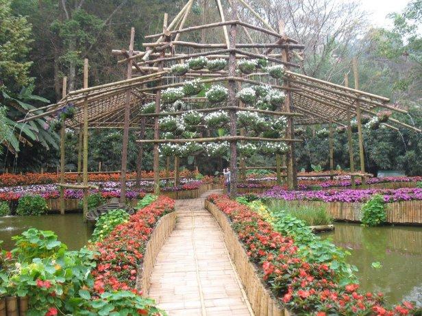 mae-fah-luang-garden-olo