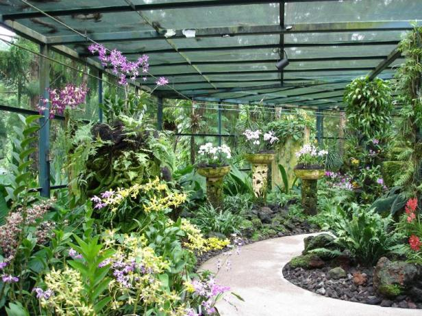 orchid-gardens-malasia