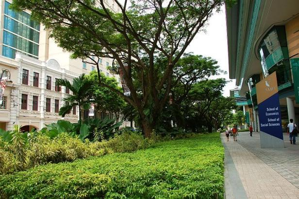 singapore-bras-basahgreen4