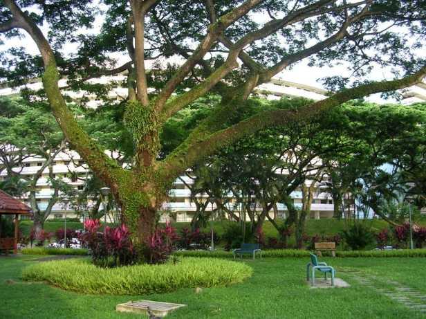 sngapore-garden-city-3