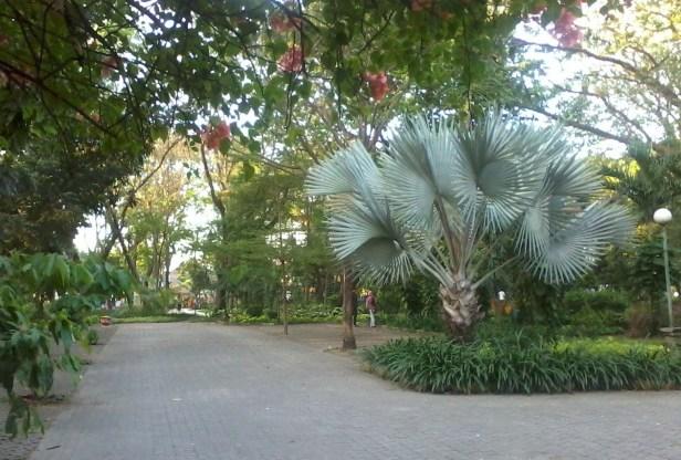surabaya-flora-park-ataman-flora-surabaya