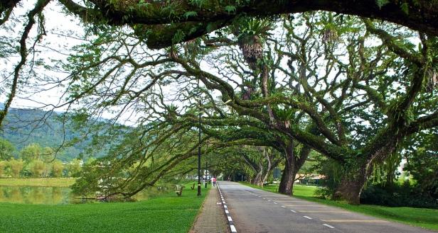 taman-tasik-kamunting-bukit-jana-rain-tree-walk