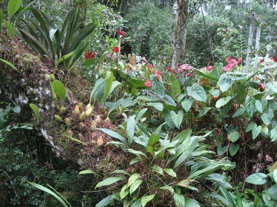 tans-camellia-garden-tanah-rata-a