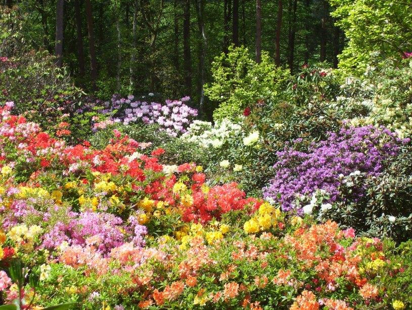 Condados de Yorkshire, Essex y Derbyshire – Jardines sin fronteras