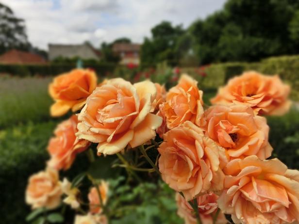 Jardines de dinamarca jardines sin fronteras for Estanque reflectante