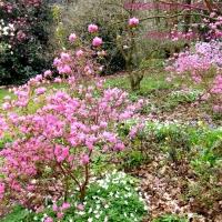 Jardines en Francia.-Normandia