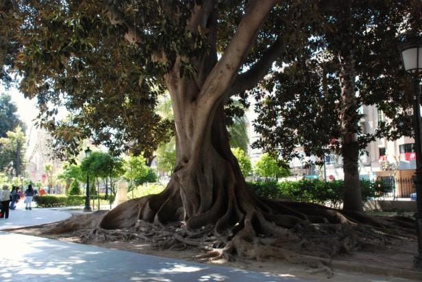Alicante albacete y murcia jardines sin fronteras for Jardin de la polvora murcia