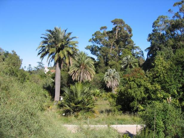 Jardines En Francia Costa Azul Jardines Sin Fronteras