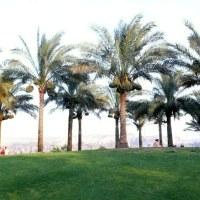Jardines egipcios en la historia