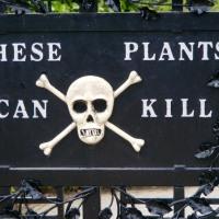 Plantas venenosas extraído de THE POISON GARDEN