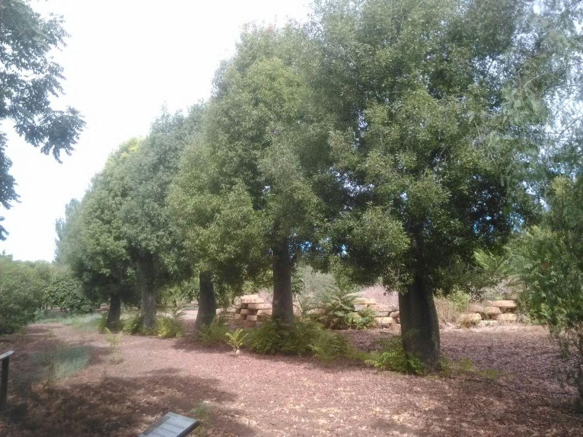 Los 10 árboles persistentes Top Ten en Sevilla