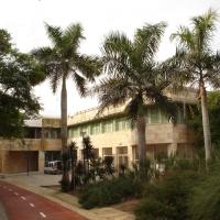 PALMERAS EN EL PAISAJE.-Daño por frío en las palmeras