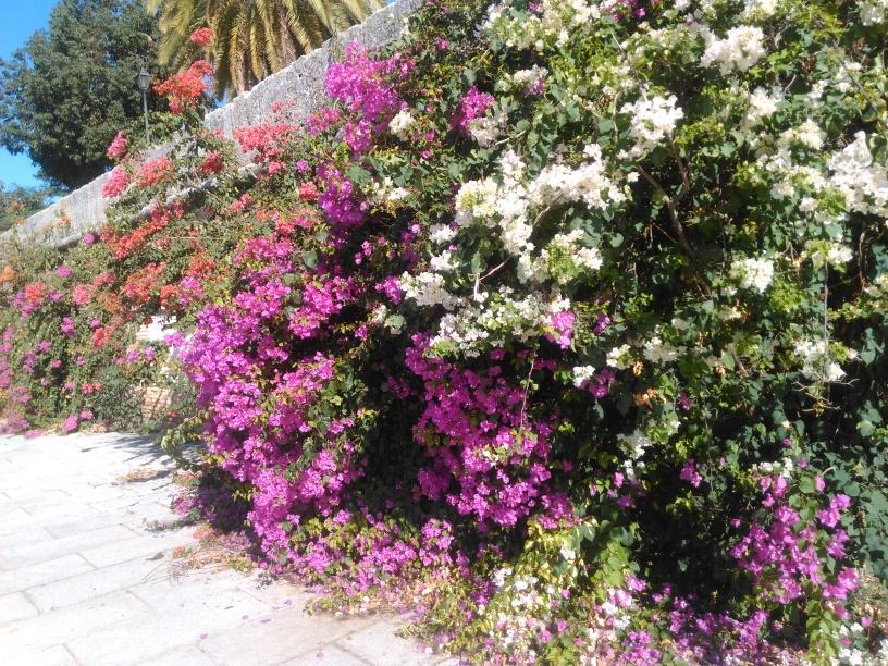 10 arbustos significativos introducidos en los jardines de for Arbustos en jardines