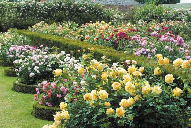 Jardines de rosas en el Reino Unido y Escocia – Jardines sin fronteras