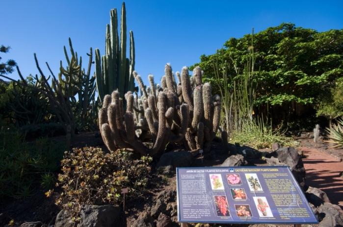Jardines botanicos de espa a jardines sin fronteras for El jardin canario